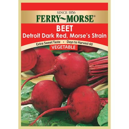 Vegetable seed Beet-DetroitDarkRed