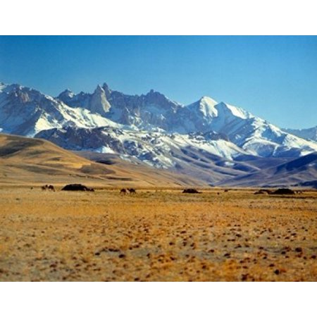 Wildlife Afghan (Afghanistan Bamian Valley Mountains Kuchi camp Canvas Art - Ric Ergenbright  DanitaDelimont (16 x 20) )