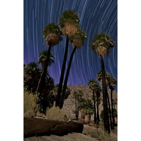 California fan palms and a backdrop of star trails in Anza Borrego Des