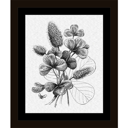 Vintage Clover Flower Engraving with Bees Black & White, Framed Canvas Art by Pied Piper... by Circle Graphics