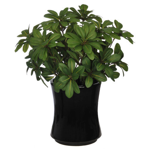 House of Silk Flowers Inc. Artificial Mini Pittosporem Desk Top Plant in Vase