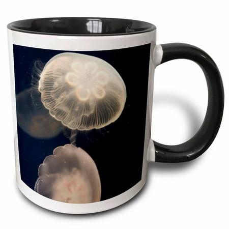 3dRose Moon Jelly fish, Monterey Bay Aquarium, California - US05 JGS0131 - Jim Goldstein - Two Tone Black Mug,