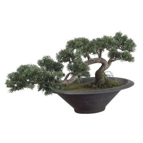 Tori Home Trailing Bonsai Plant in Pot