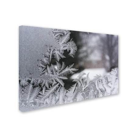 Trademark Fine Art 'Frost on my Window IV' Canvas Art by Kurt (Opsite Iv Window)