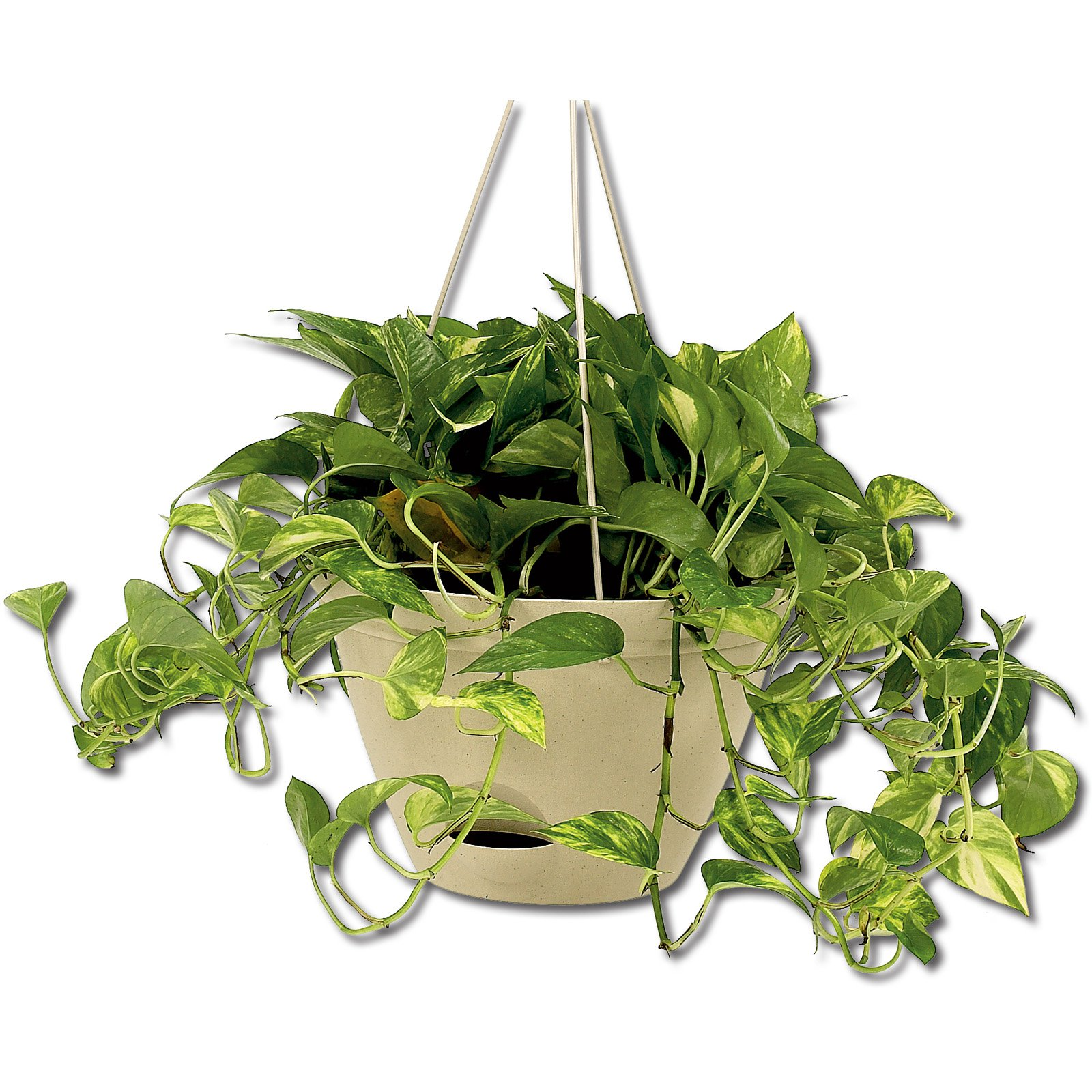 Missry Self Watering Flare Hanging Planter - Set of 3
