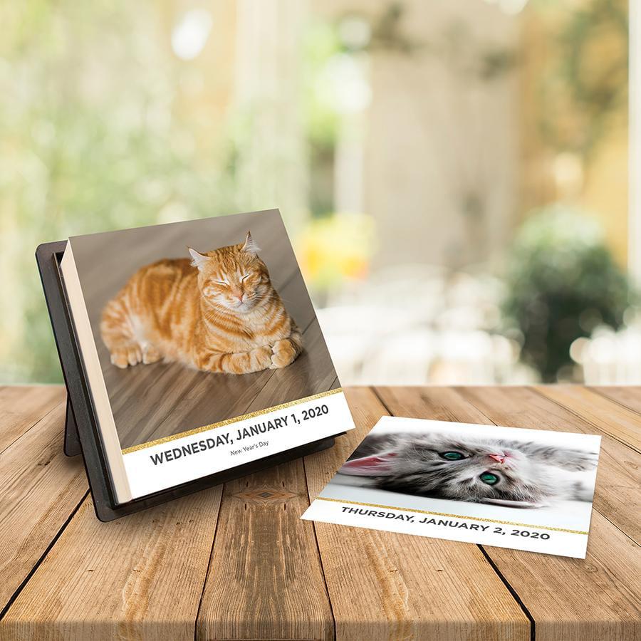 2020 Catstagram Daily Desktop Calendar by TF Publishing