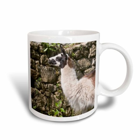 3dRose Peru, Llama along the Inca Trail at Machu Picchu - SA17 DJO0159 - Diane Johnson, Ceramic Mug, 11-ounce