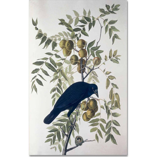 "Trademark Fine Art ""American Crow"" Canvas Art by John James Audubon"