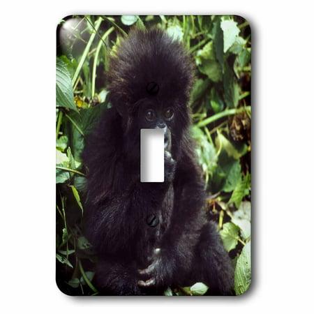 3dRose Mountain Gorilla baby Rwanda AF35 KSC0000 Kevin Schafer Single