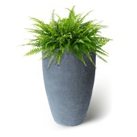 Algreen Athena Planter, 20-Inch Height by 12.6-In., Self-Watering Planter, Charcoalstone