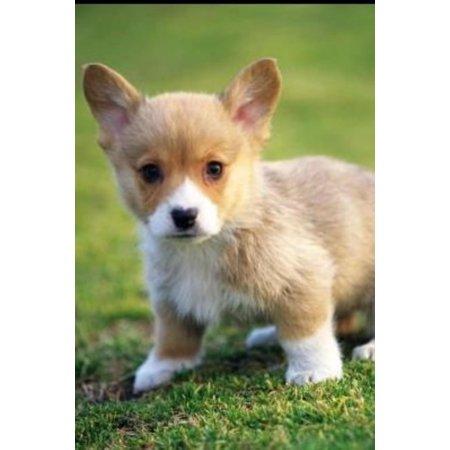 World's top TEN Cuetest Animals - eBook