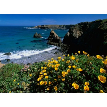 California Poppies on coastal cliff Jughandle State Reserve California Poster Print by Tim Fitzharris California State Poster Set