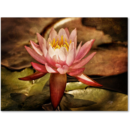 "Trademark Fine Art ""Magic Lily"" Canvas Art by Lois Bryan"