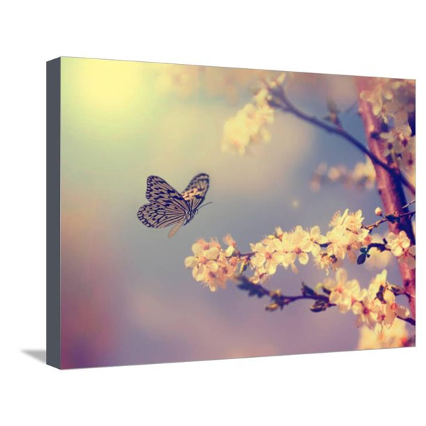 Vintage Butterfly and Cherry Tree Flower in Spring Stretched Canvas Print Wall Art By Dark Moon Pictures