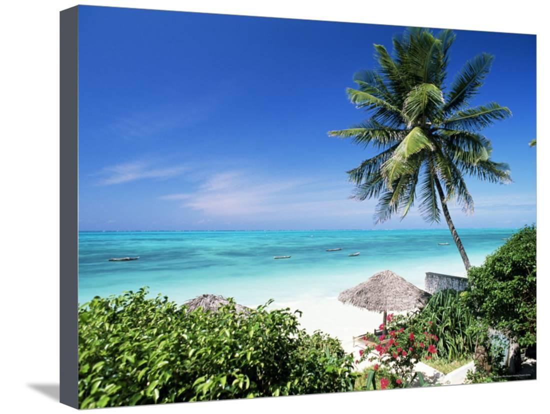 Palm Tree, White Sand Beach and Indian Ocean, Jambiani