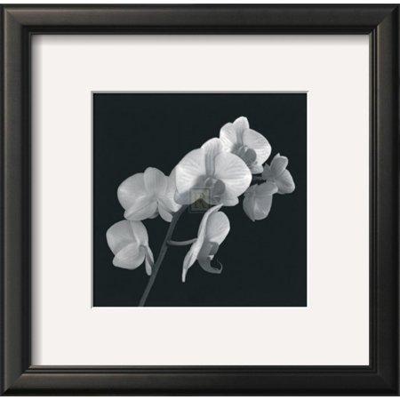 Orchid Illusion I Framed Art Print Wall Art  By Katja Marzahn - 14x14