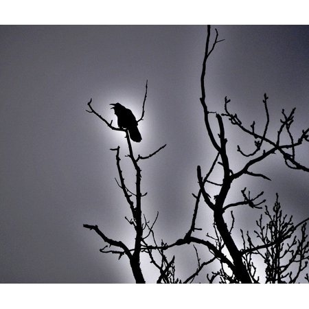Framed Art For Your Wall Raven Bird Spooky Blackbird Silhouette Halloween 10x13 Frame (Halloween Raven Silhouettes)