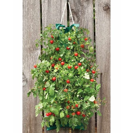 Hanging Edible Garden Kit - Tomatoes