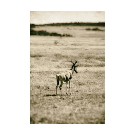 African Plains II Print Wall Art By Golie Miamee