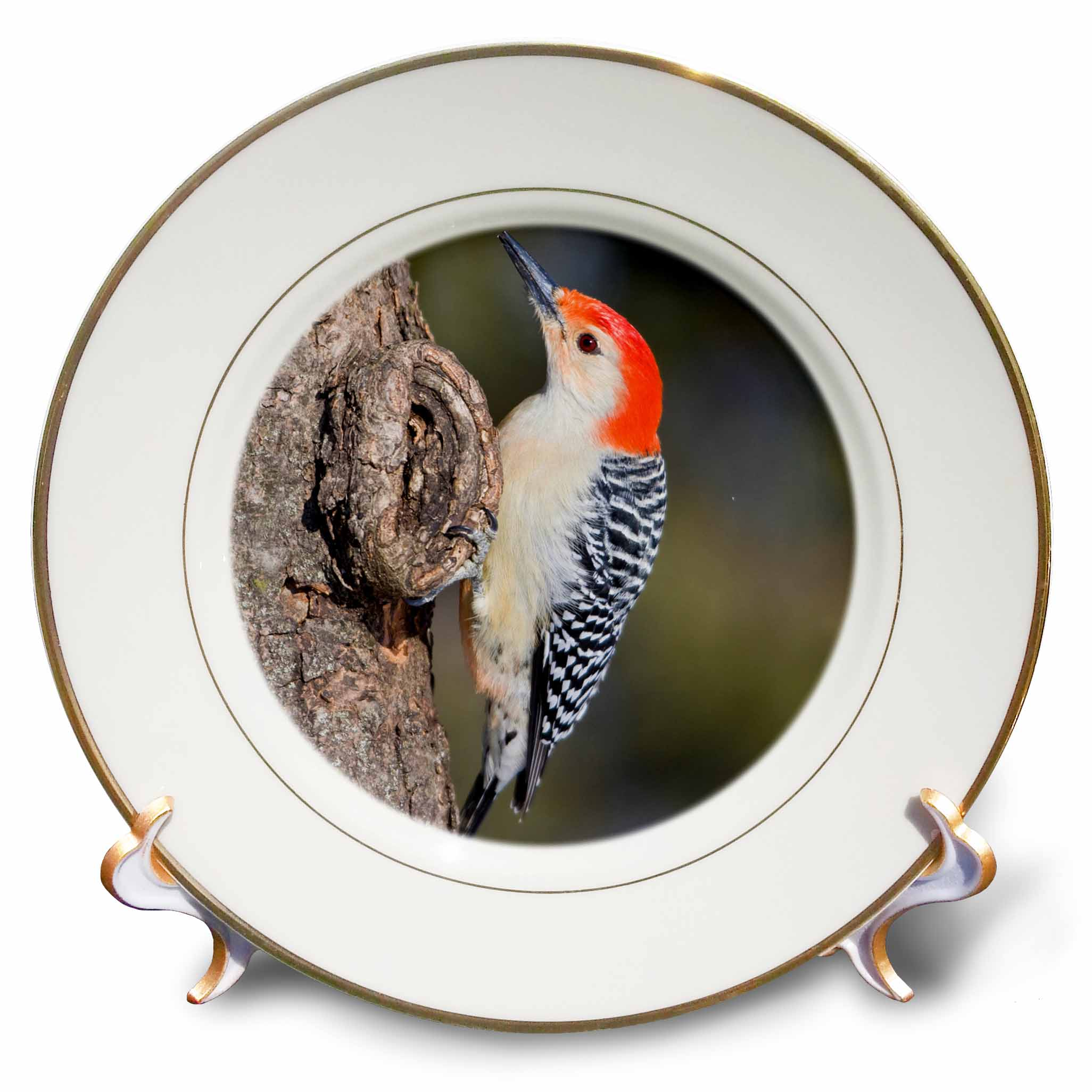 3dRose Marion Co. IL - Red-bellied Woodpecker feeding nestling at nest cavity, Porcelain Plate, 8-inch