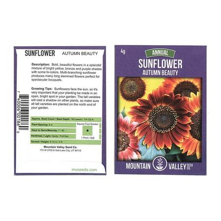 Sunflower Wild Flower Garden Seeds - Autumn Beauty - 4 Gram Packet - Annual Wildflower Gardening Seeds