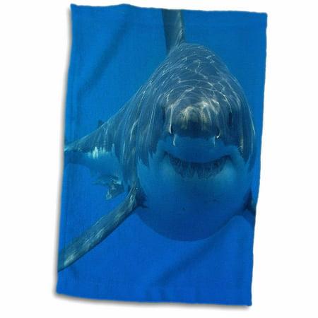 3dRose Underwater Great White Shark - Towel, 15 by 22-inch - Shark Towel