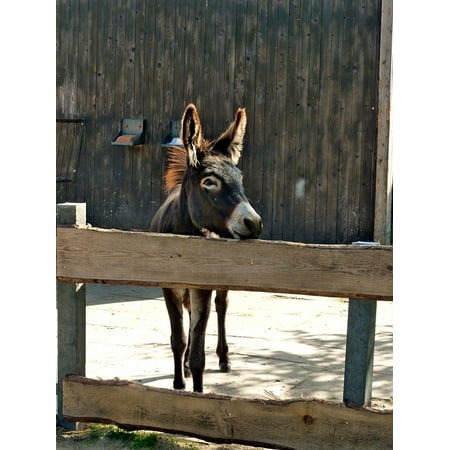 Peel-n-Stick Poster of Donkey Beast Of Burden Animal Donkey Foal Brown Poster 24x16 Adhesive Sticker Poster Print (Best Stickers)