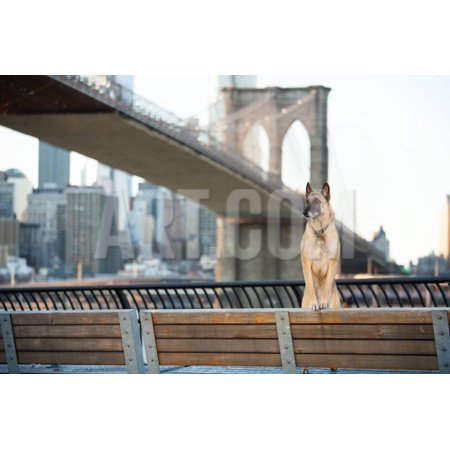 Dog Standing in Front of Brooklyn Bridge and NYC Skyline Horizontal Print Wall Art By The Dog Photographer - Halloween Dog Show Nyc