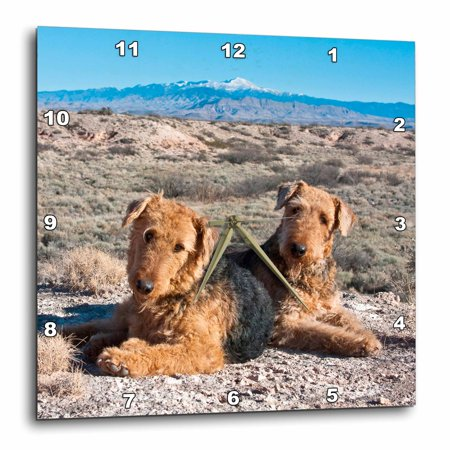 3dRose Airedale Terrier dogs, New Mexico - US32 ZMU0027 - Zandria Muench Beraldo - Wall Clock, 10 by (Gold Airedale Dog)