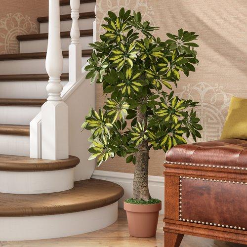 Fleur De Lis Living Schefflera Tree with Pot