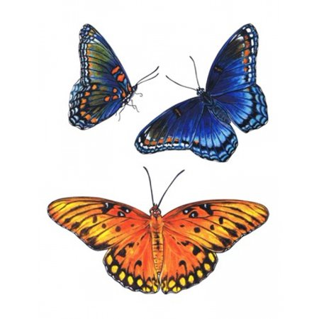 Red Spot Stone - Red Spotted Purple And Brilliant Eye Jewel Butterflies Canvas Art - Marilyn Barkhouse (18 x 24)