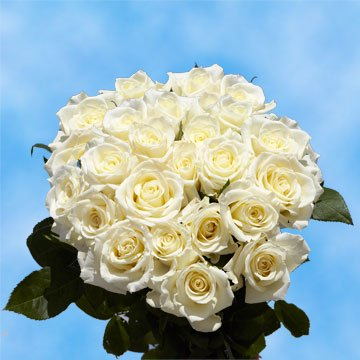 GlobalRose 50 Fresh Cut White Roses - Fresh Flowers Express Delivery - Perfect Long Stem Roses