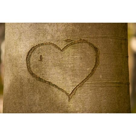 Tree Bark Carving (LAMINATED POSTER Romance Love Tree Carved Heart Romantic Tree Bark Poster Print 24 x)