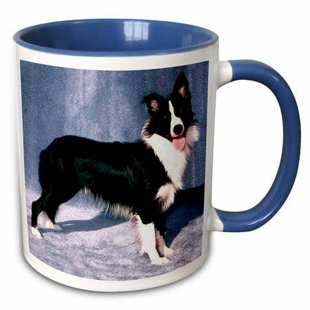 3dRose Border Collie - Two Tone Blue Mug, - Blue Border Collie