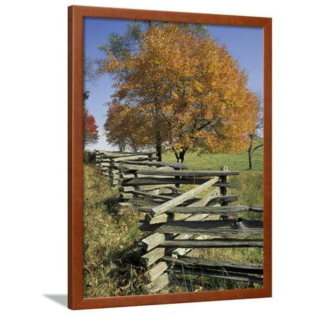 Split Rail Fence and Tree, Hensley Settlement, Cumberland Gap National Historic Park, Kentucky, USA Framed Print Wall Art By Adam Jones