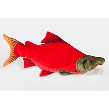 Sockeye Salmon Fish 10