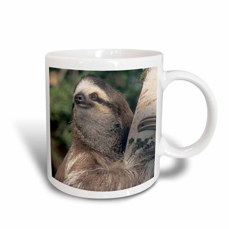 3dRose Three-toed Sloth wildlife, Costa Rica - SA22 KSC0126 - Kevin Schafer, Ceramic Mug, 11-ounce