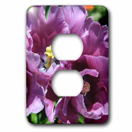 Design Public Outlet - 3dRose Lilac tulips blooming in the public garden. - 2 Plug Outlet Cover
