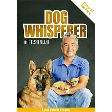 Dog Whisperer with Cesar Millan: Power of the