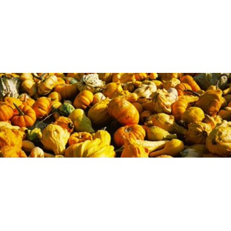 Pumpkins and gourds in a farm Half Moon Bay California USA Canvas Art - Panoramic Images (36 x 13)