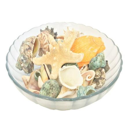 Perfect Maze Mixed Beach Sea Shells Seashells with Starfish Party Table Home Décor - Beach Party Decor