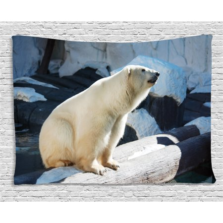 Zoo Tapestry  Polar Bear Wildlife Park Rocks Water Cold Climate Tourist Attraction Image  Wall Hanging For Bedroom Living Room Dorm Decor  80W X 60L Inches  Light Blue Black Cream  By Ambesonne