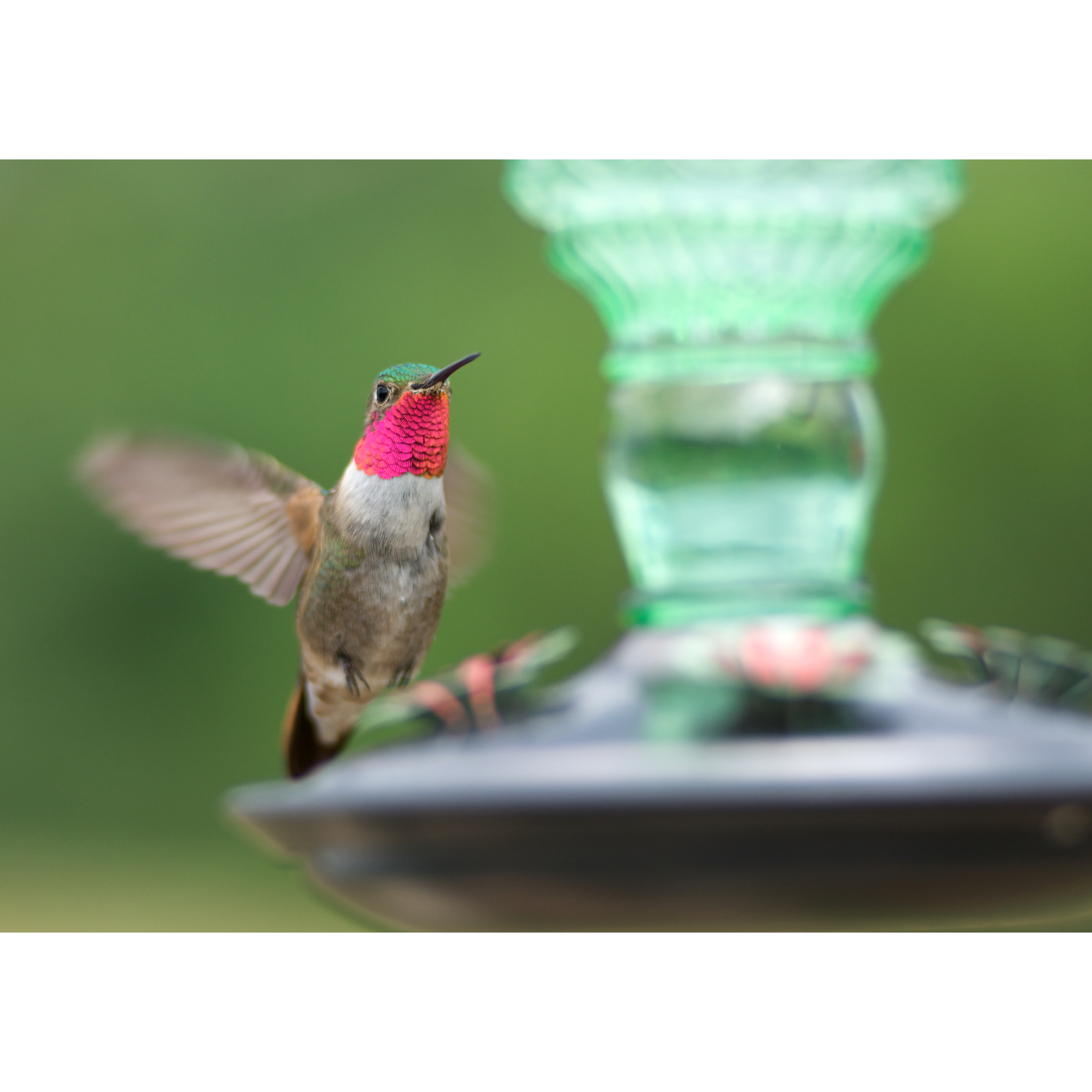 and pet by premium hummingbird feeder natures bird of unique reviews hummingbirds red nectar product hand globe best yellow products with blown ounces rave decorative home glass birds feeders