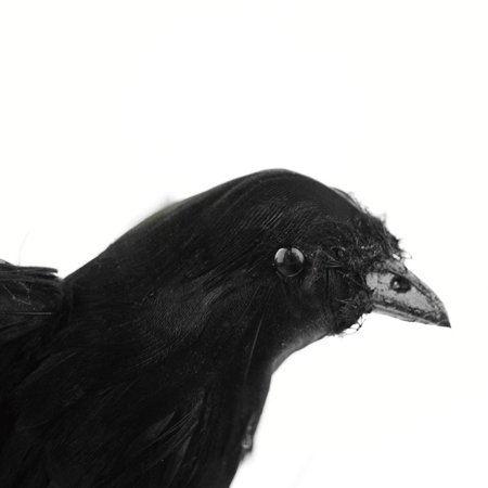 Lifelike Scary Raven Crow Prop Simulated Crow Realistic Bird Home Decoration Halloween - image 2 of 4