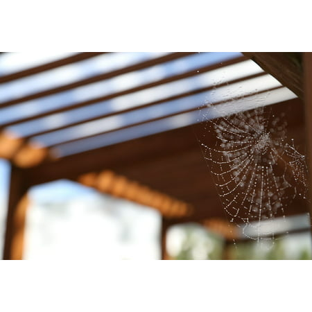 Canvas Print Fuzzy After Rain Spider Web Stretched Canvas 10 x 14 (Fuzzy Spiders)