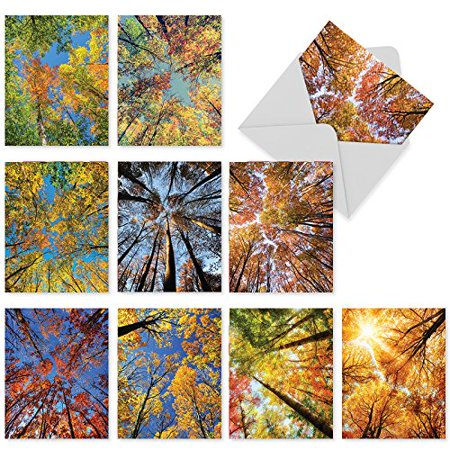 'M3006 M3006 Over The Top' 10 Assorted Thank You Note Cards Featuring Colorful Nature Inspired Photography Of Autumnal Trees Reaching Skyward with Envelopes by The Best Card