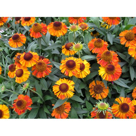 Image of Better Homes 2.5qt Bhg Helenium Shrt N Sasy