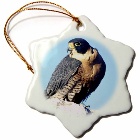 3dRose Peregrine Falcon, bird Native to US - NA02 DNO0143 - David Northcott, Snowflake Ornament, Porcelain, 3-inch ()