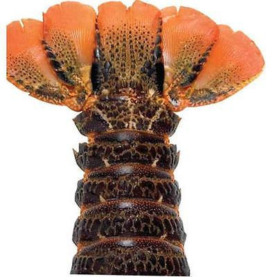 Istilo Lobster Gram B8T6 Six 8 oz. Brazilian Lobster Tails Warm Water Food and Beverages... by GSS