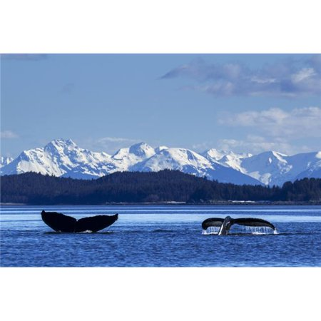 Posterazzi DPI12251582 A Pair of Humpback Whale Tails As They Dive Beneath The Surface Lynn Canal Inside Passage Southeast Alaska Poster Print - 19 x 12 in. - image 1 of 1